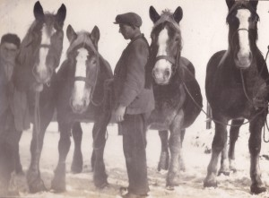 Paarden op onze boerderij, voor de Eerste Wereldoorlog
